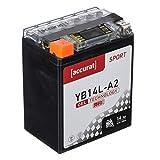 Accurat Motorradbatterie YB14L-A2 14Ah 200A 12V...